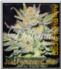 Delicious Blue Auto CBD Female 5 Marijuana Seeds